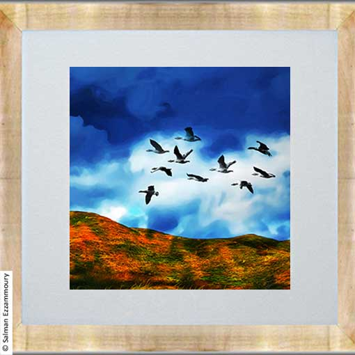 Vliegende Wilde Ganzen - Texel
